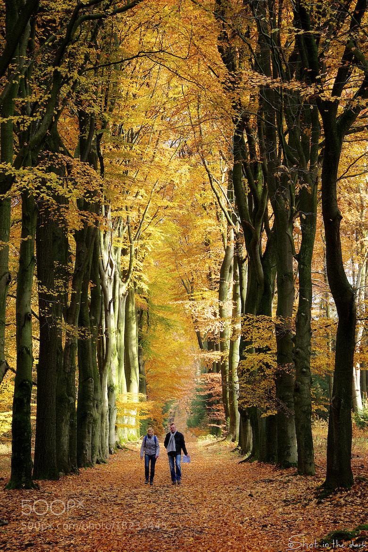 Photograph Autumn walk by Peter Bijsterveld on 500px