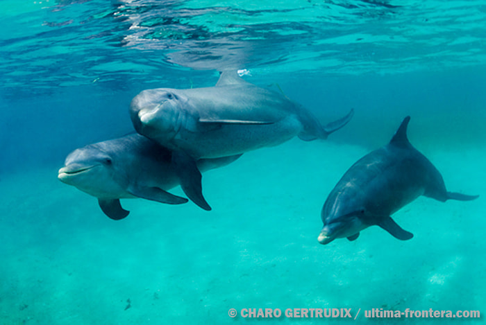 Photograph Dolphin by Charo Gertrudix on 500px