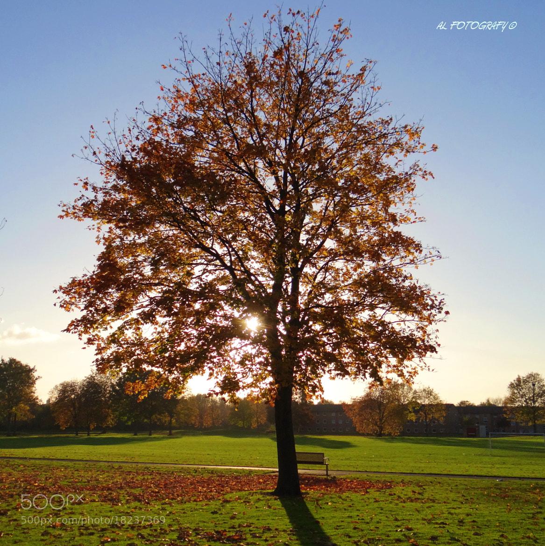 Photograph Last Autumn Days!!.. by Alok Venkatesh on 500px