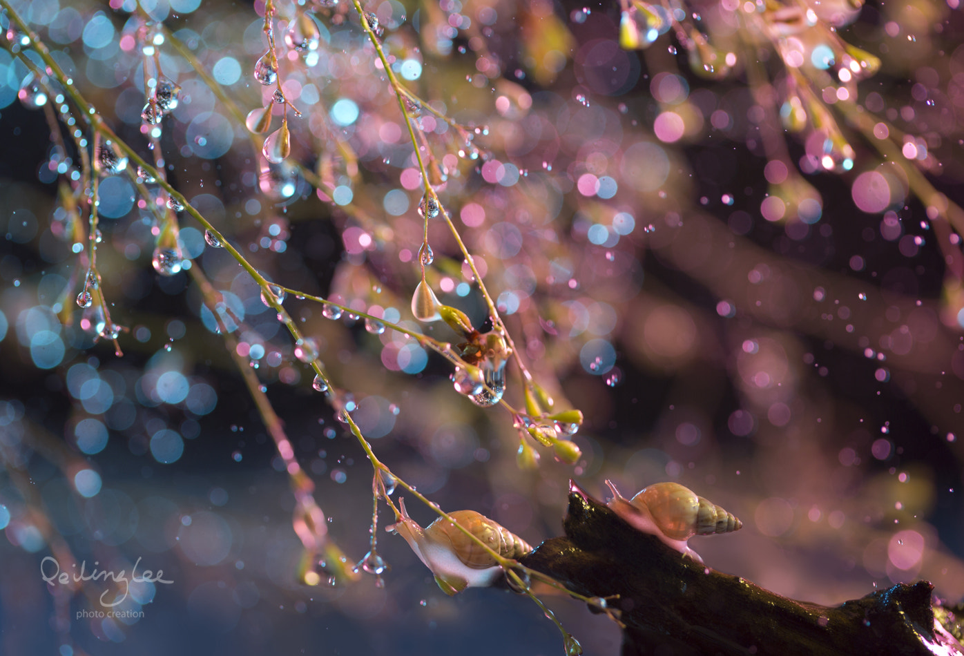 Photograph Petal rain by Lee Peiling on 500px