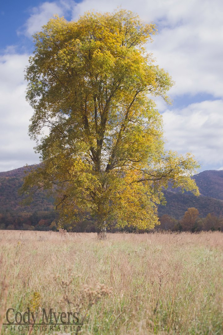 Photograph Cades Cove by cody  myers on 500px