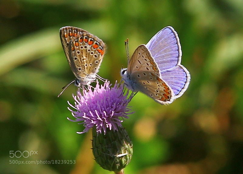 Photograph Butterflys... by Nurşen Biçer on 500px