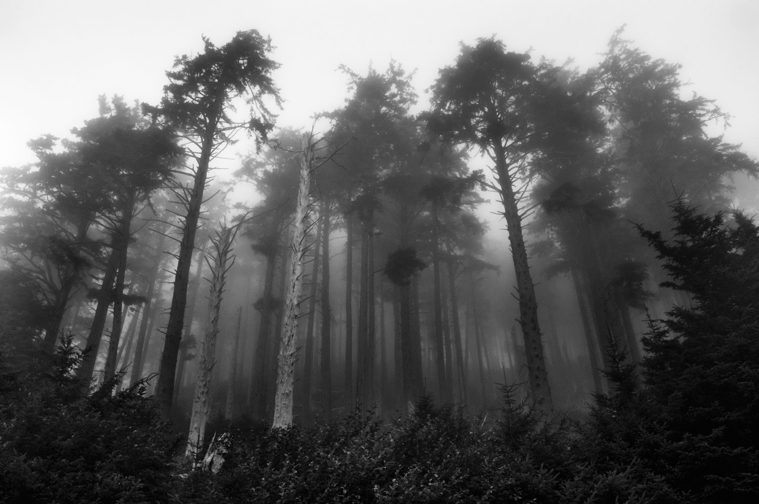 Photograph into the mist by Camilla Karlsen on 500px
