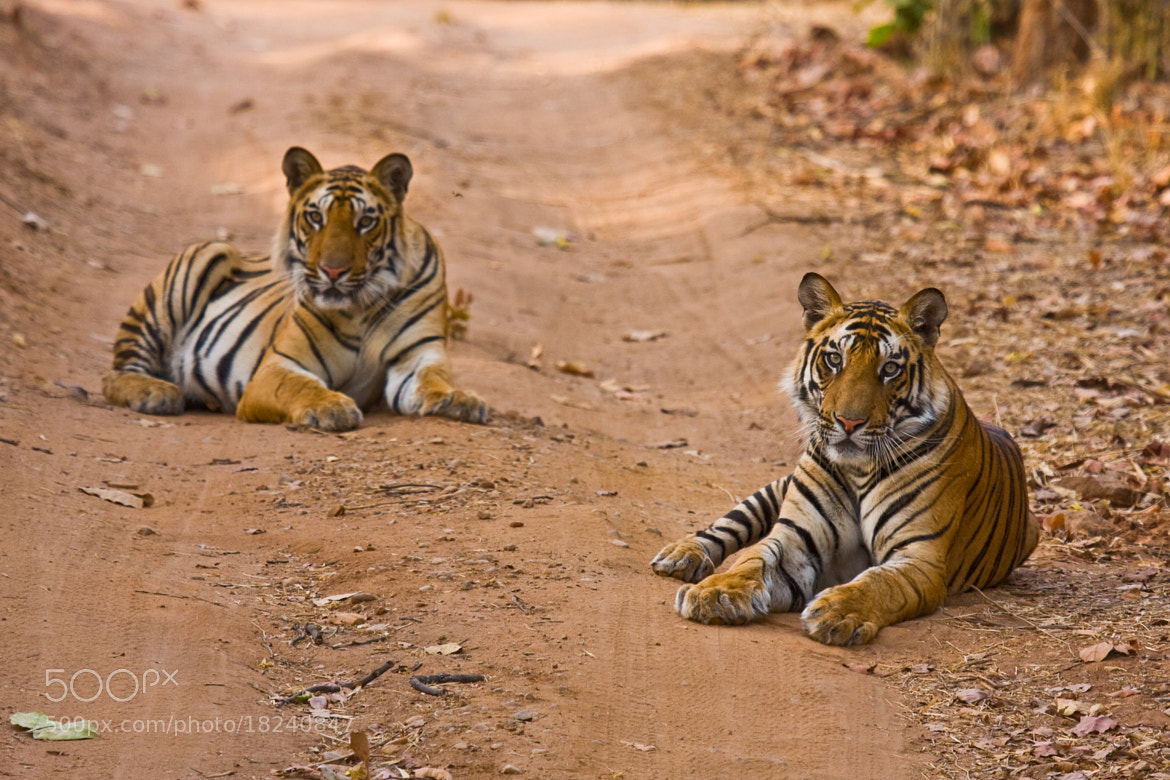 Photograph Double Trouble by David Taylor-Smith on 500px