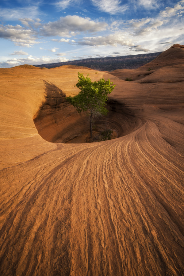 Life Finds a Way by Phill Monson on 500px.com