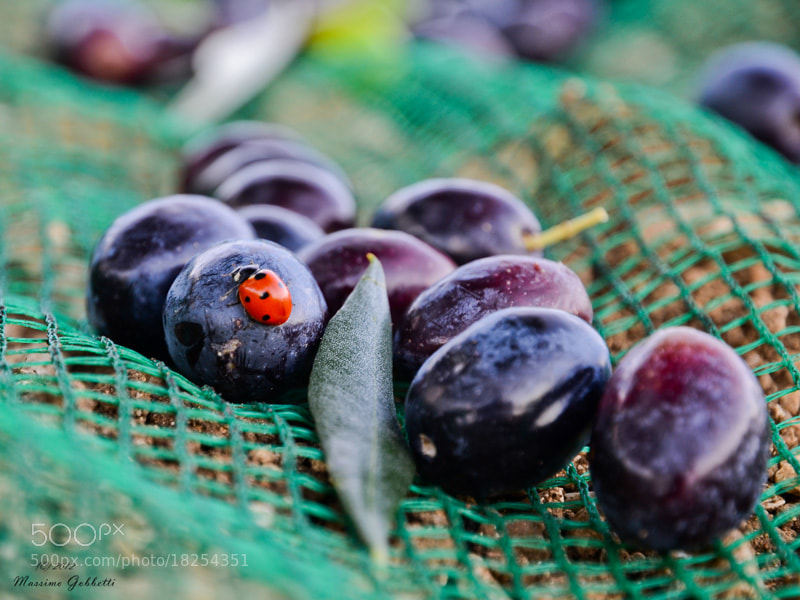 Photograph Lucky Olives by Max G on 500px