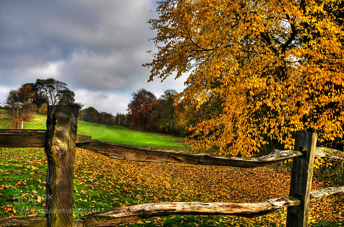Photograph Autumn symphony #2 by Ed Younan on 500px