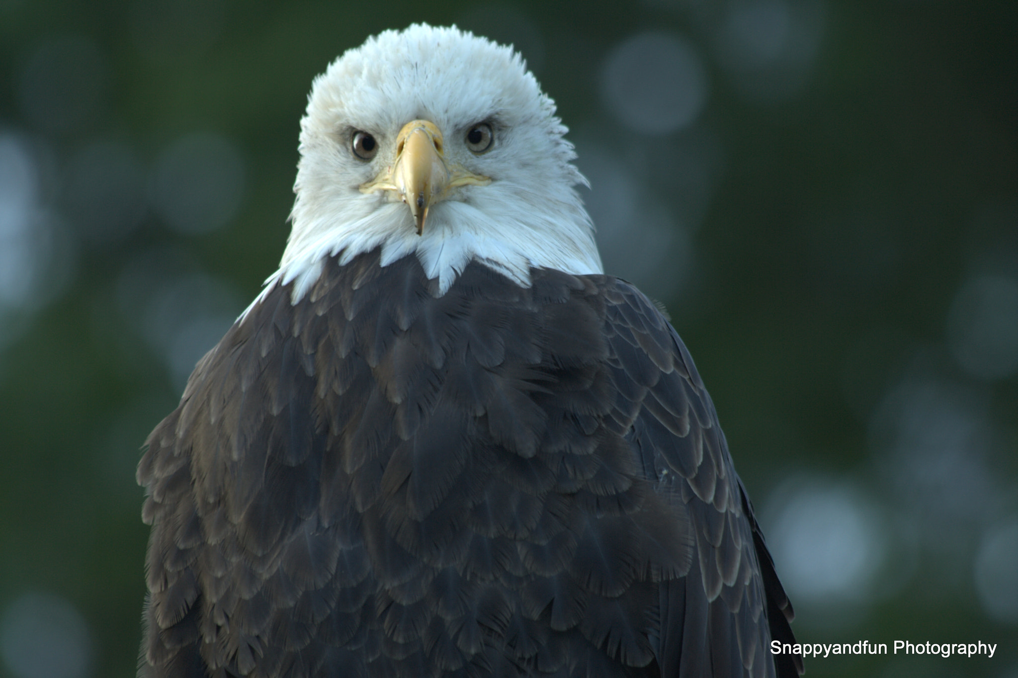 Photograph Eagle on Watch by Ronald Campbell on 500px