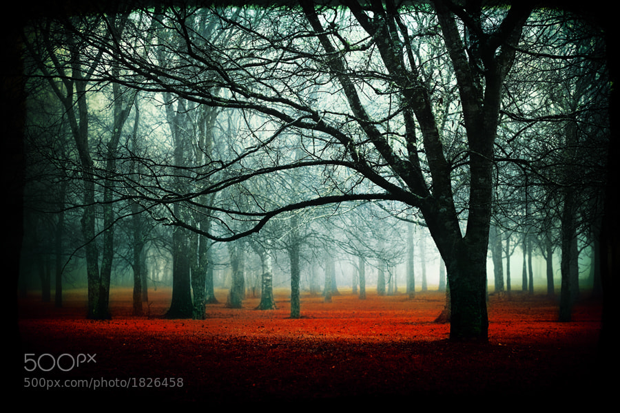 Photograph Enter by Katya Horner on 500px