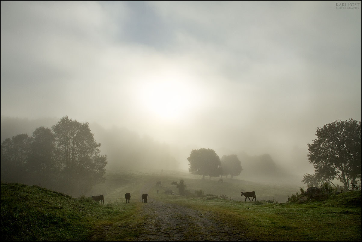 Photograph Why I Love Mornings by Kari Post on 500px