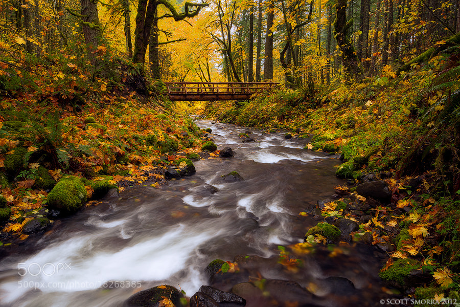 Photograph Bridge in the Woods by Scott  Smorra on 500px