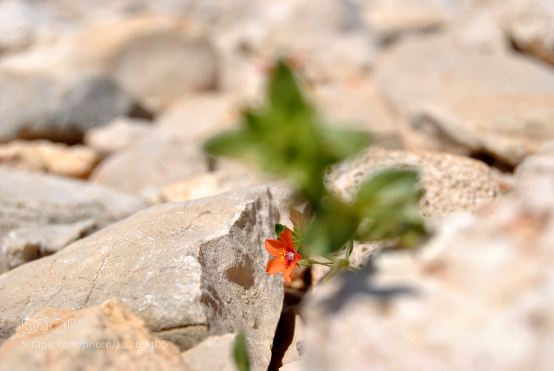 Photograph survival by madara lapiņa on 500px