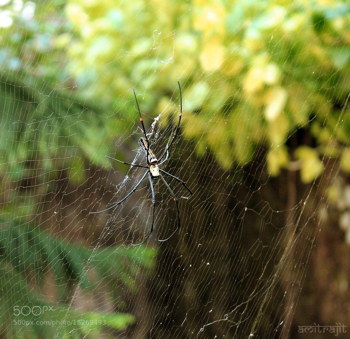 Photograph spider #1 by Amitrajit Niyogi on 500px