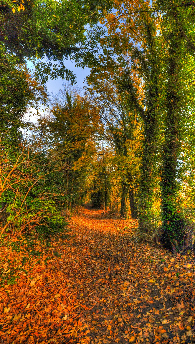 Photograph Autumn tapestry by Edward Younan on 500px