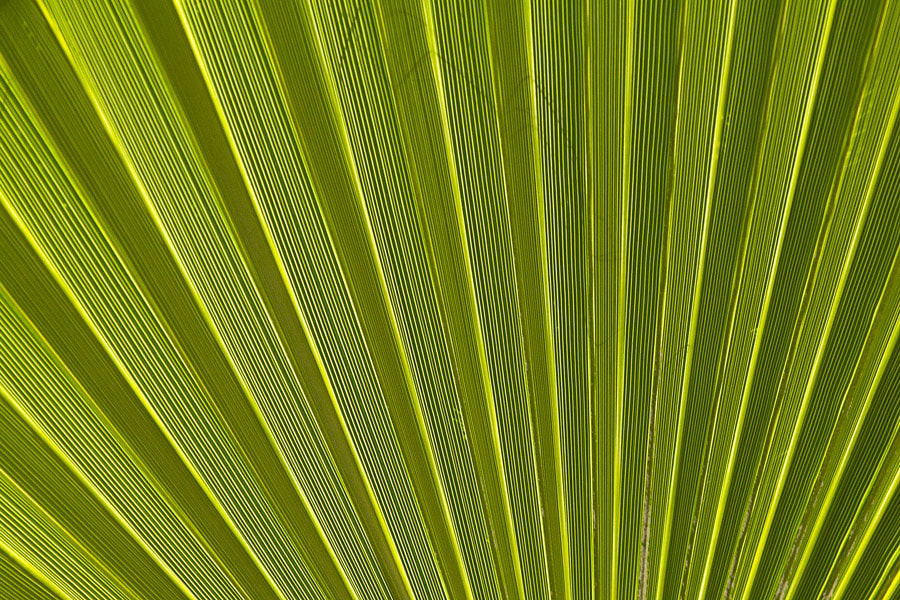 Photograph Palm leaf by Strannik Fox on 500px