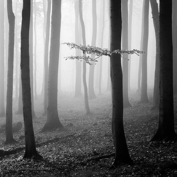 Photograph Trees by Martin Rak on 500px