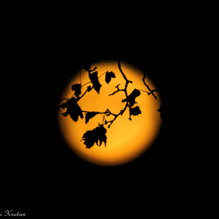 Supermoon and some autumn leaves