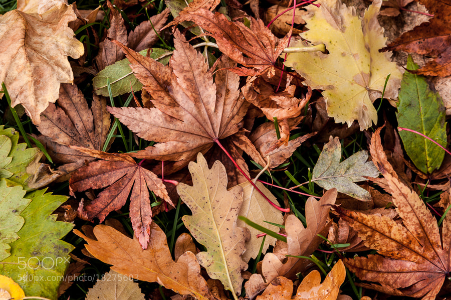 Photograph Leaf Medley by Dave Gregory on 500px