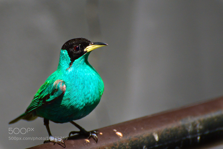 Photograph Beautiful green by Stojak Nikola on 500px