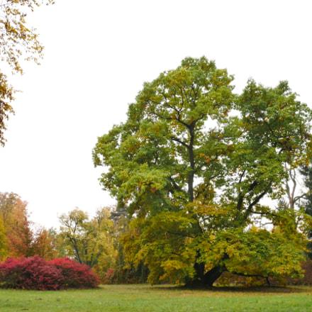 Chateau Sychrov - Park