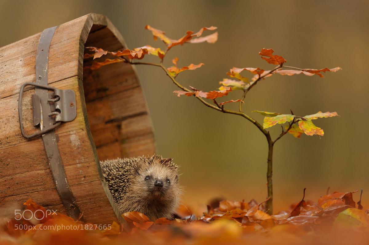Photograph Autumn garden by Edwin Kats on 500px