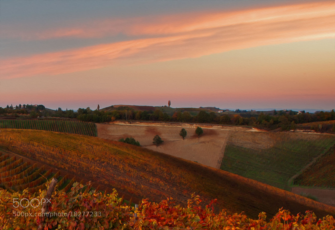 Photograph Sunset on vineyard, langa, Italy by Stefano Crea on 500px