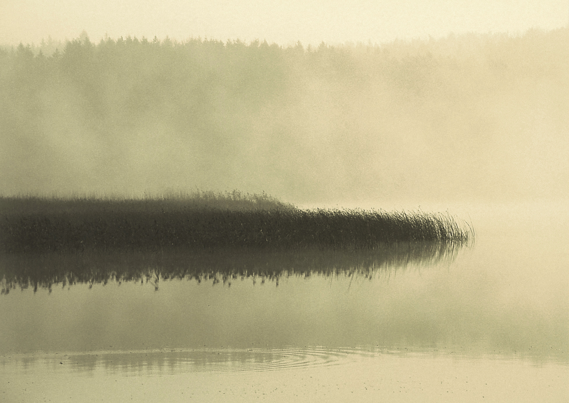 Photograph Reflections in the fog by * *  REgiNA  * *  on 500px