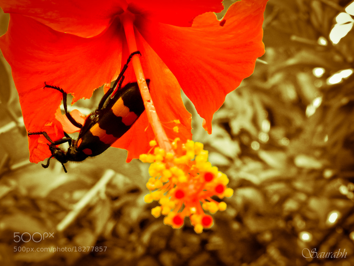 Photograph hanging high by Saurabh Soni on 500px
