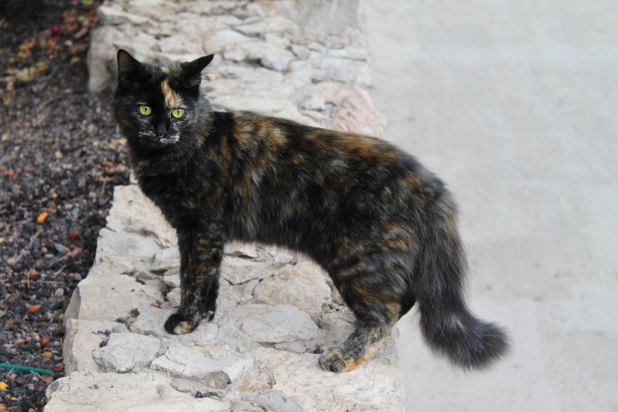 Photograph Canarian cat by Olga H on 500px