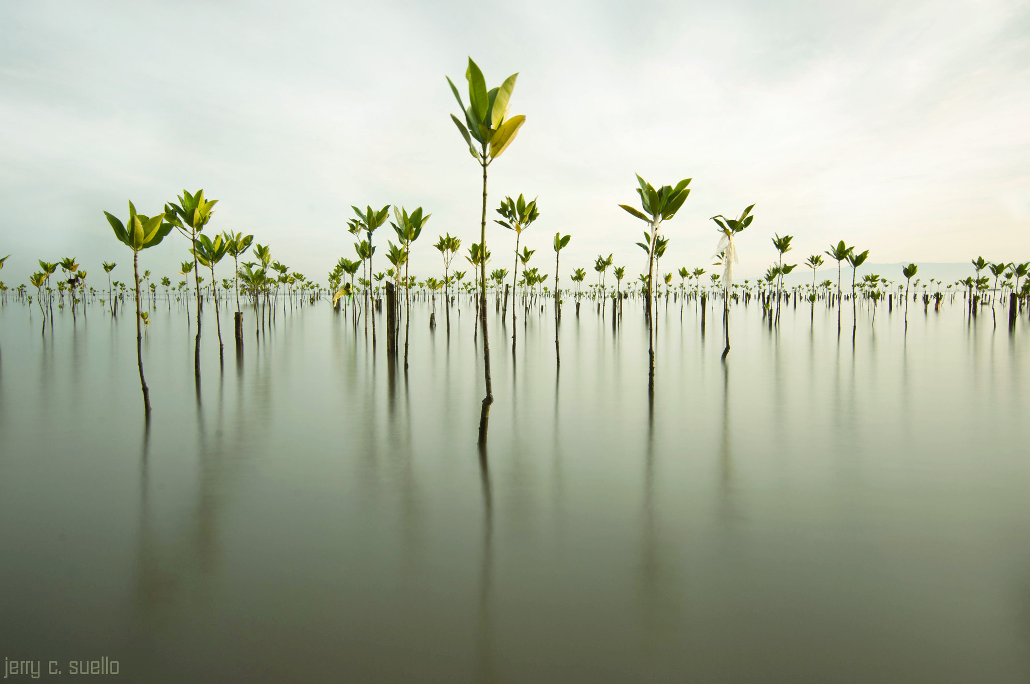 Photograph go GREEN by jerry suello on 500px