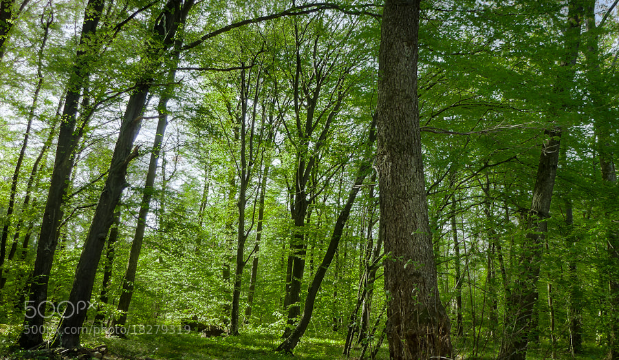 Photograph green peace by Dominik Astrodi on 500px