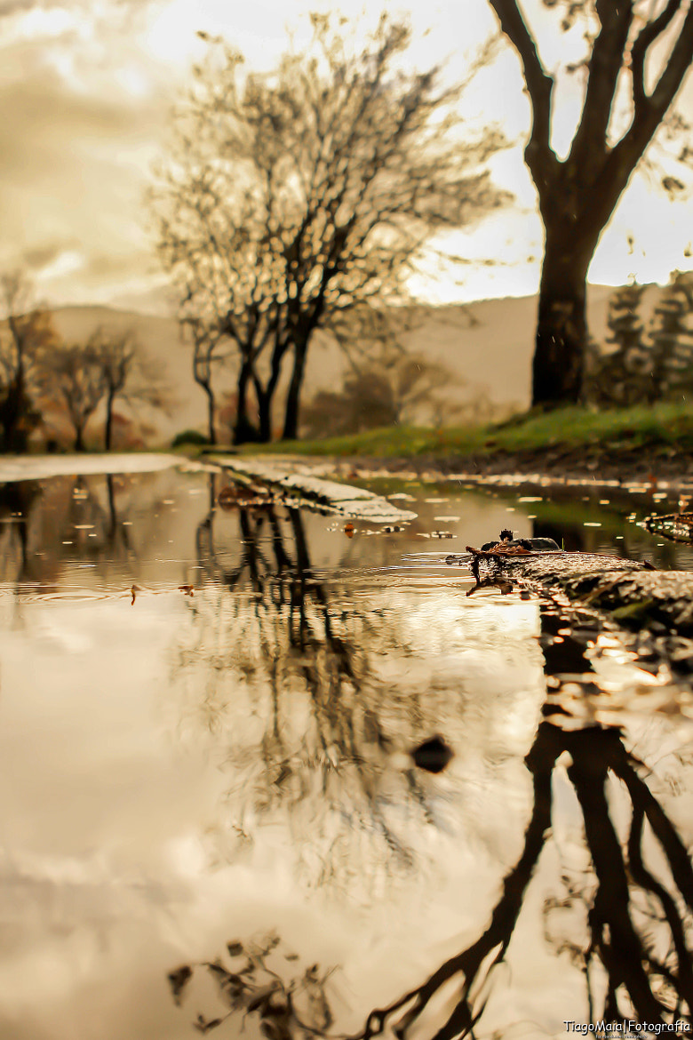 Photograph Autumn reflexions... by Tiago Maia on 500px