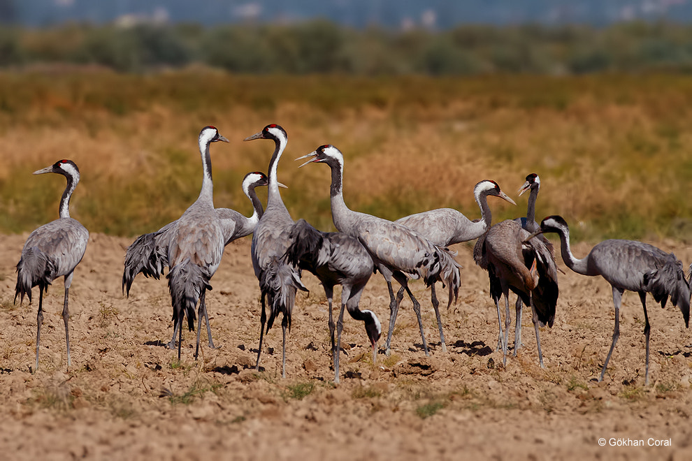 Photograph Cranes by Gökhan CORAL on 500px