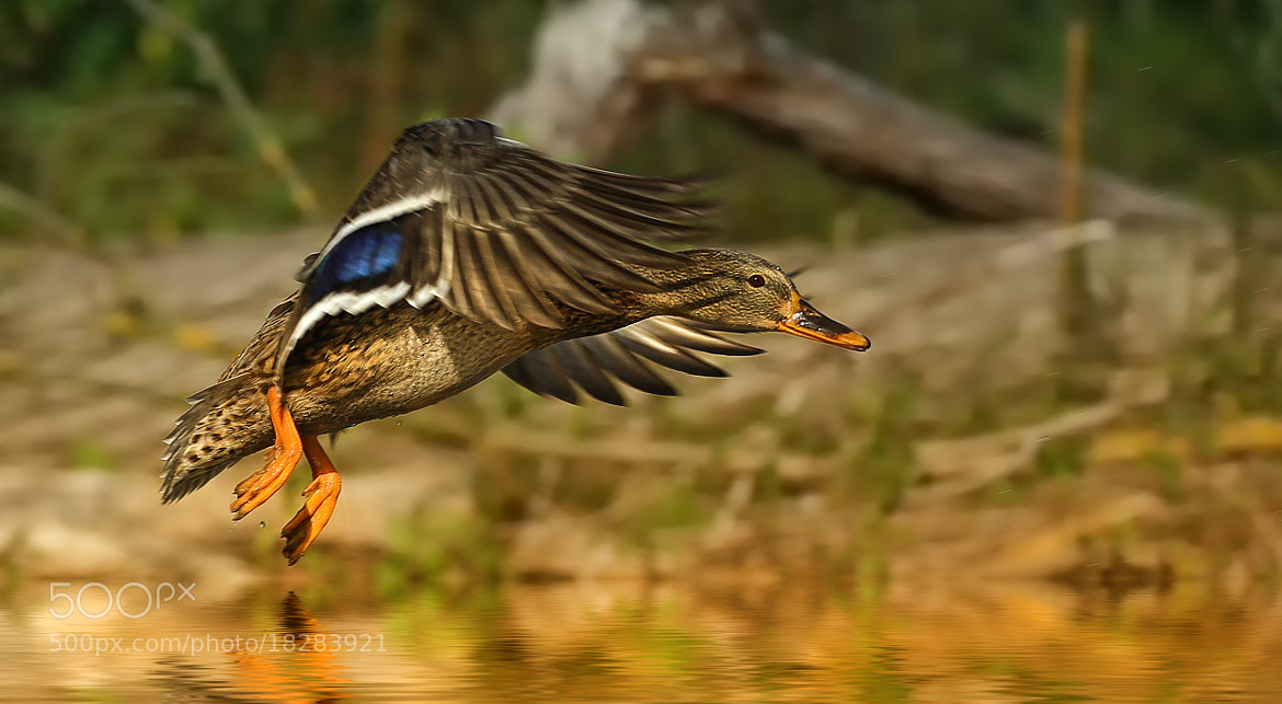 Photograph touch down by Detlef Knapp on 500px