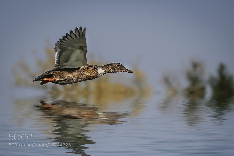 Photograph flight no. 1 by Detlef Knapp on 500px