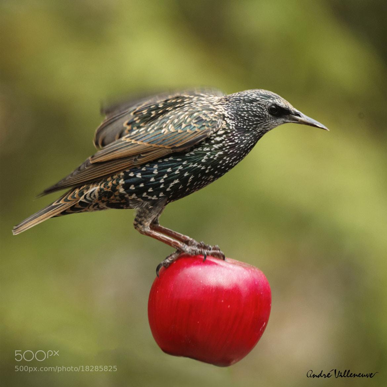 Photograph The big apple by Andre Villeneuve on 500px