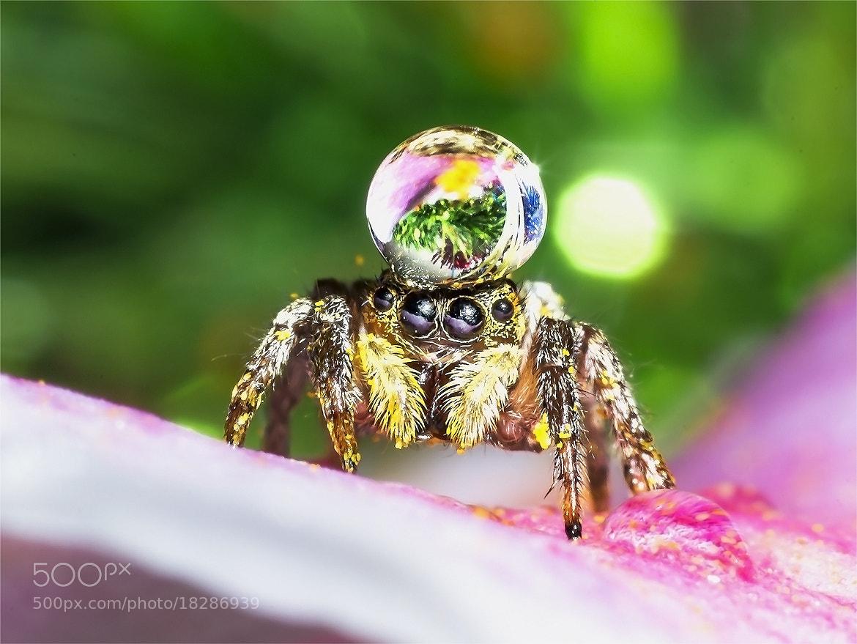 Photograph Spider2 by OKAWA โอ๋กะหว้า. somchai on 500px