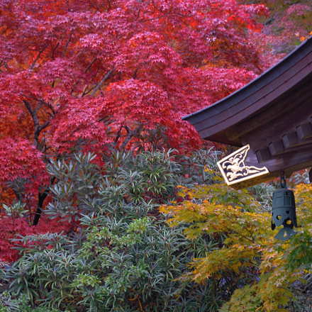 Red leaves and temple