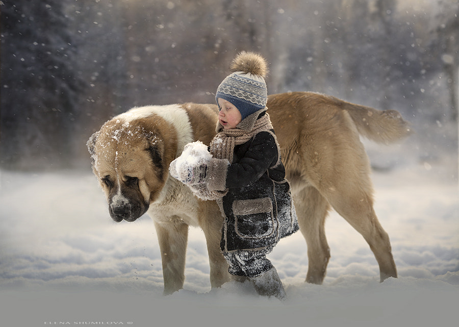 winter day by Elena Shumilova on 500px.com