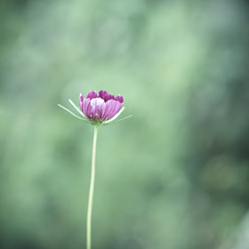 Lonely by Sarah M (Sarah-Martinet)) on 500px.com