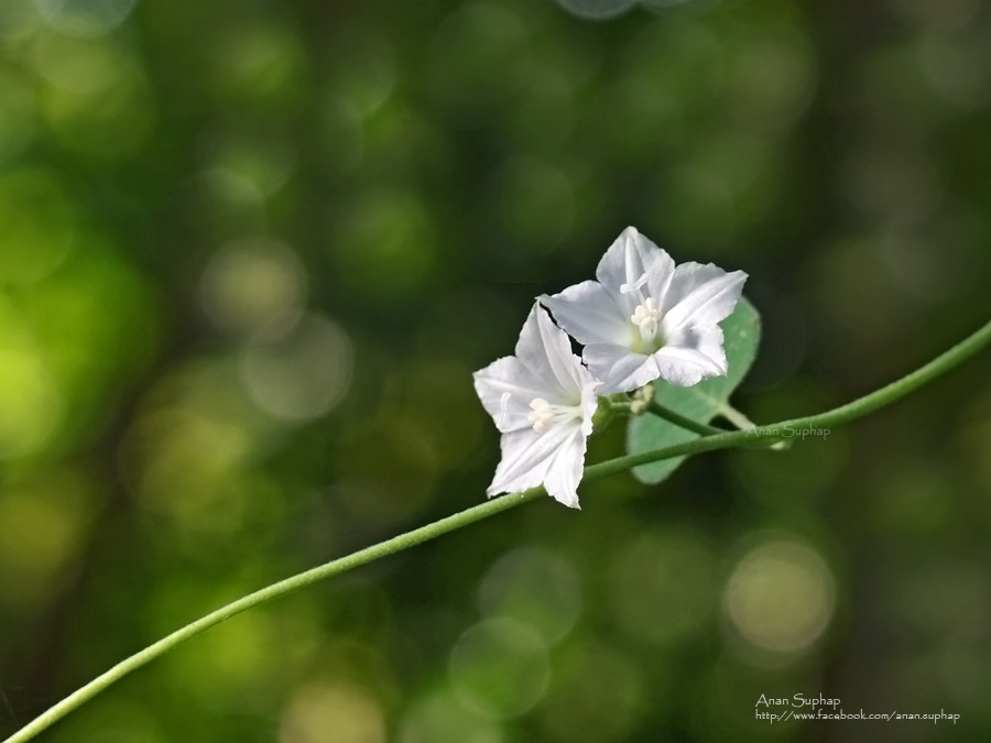 Photograph grass flower  by Anan Suphap on 500px