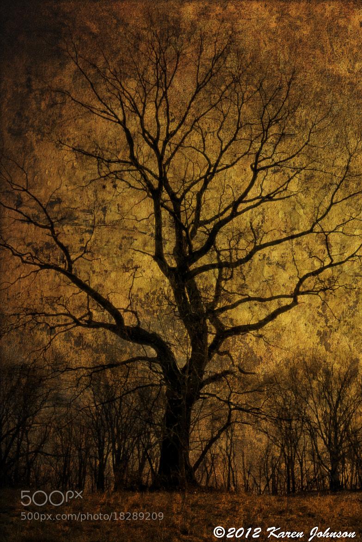 Photograph Rockefeller Tree 1 by Karen Johnson on 500px