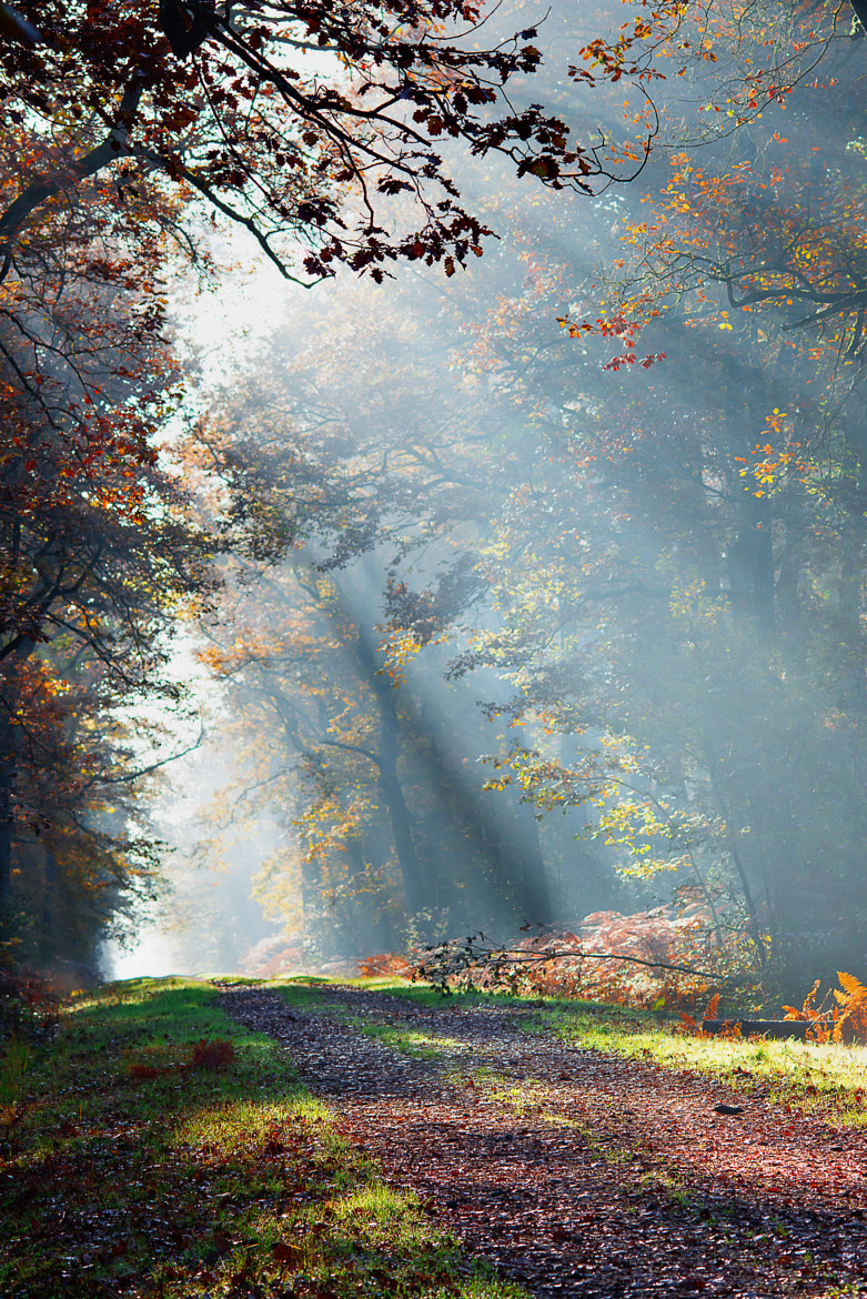 Photograph Autumn morning by Nicolas Maillot on 500px