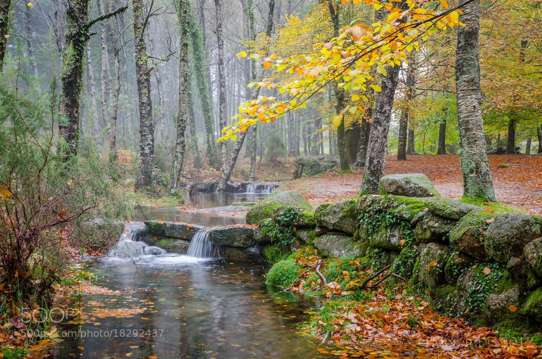 Photograph Fall... #2 by Fernando Moreira on 500px