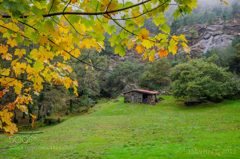 Photograph Fall #3 by Fernando Moreira on 500px