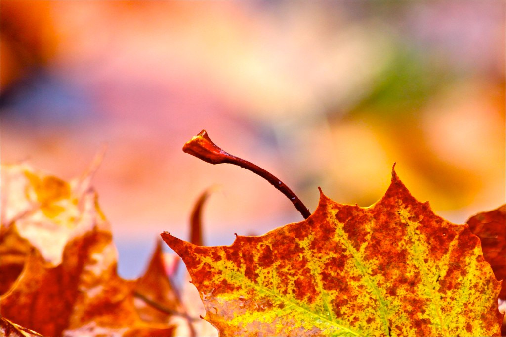 Photograph Fall Up Close by LuAnn Hunt on 500px