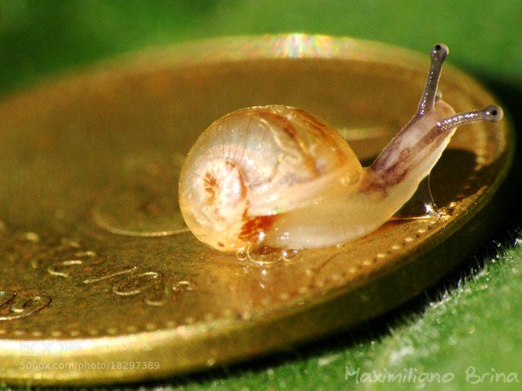 Photograph 10 cent snail by Maximiliano Brina on 500px