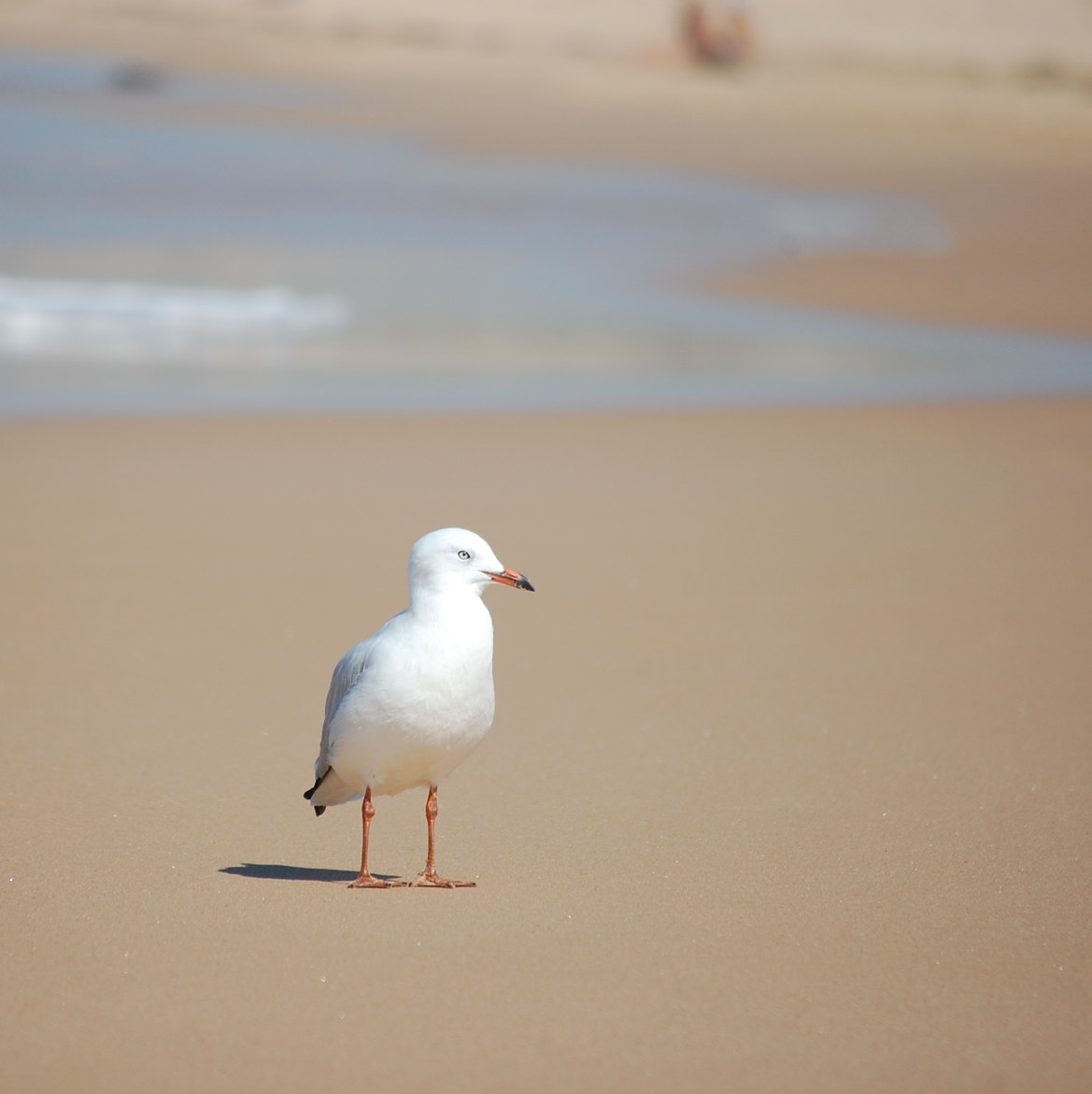 Photograph Sea Gull by King Chen on 500px