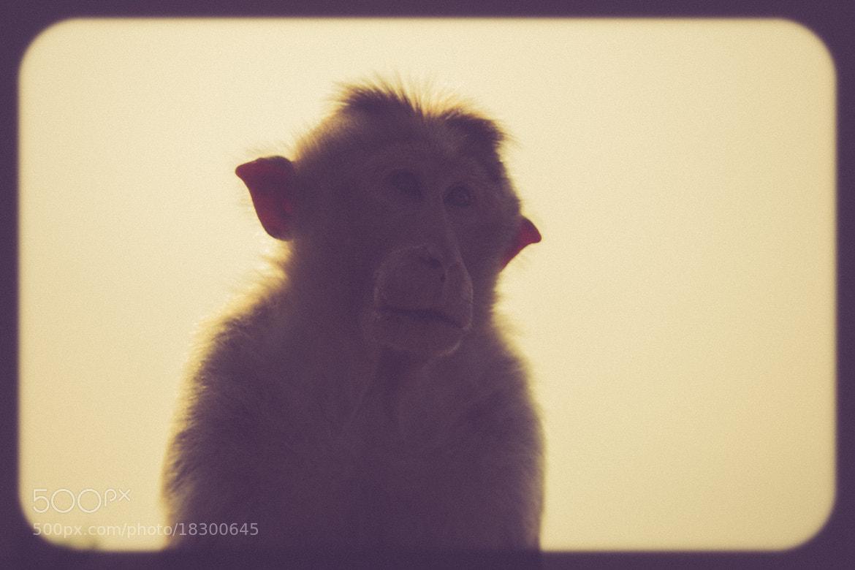 Photograph The monkey by Anand SundarRaj on 500px