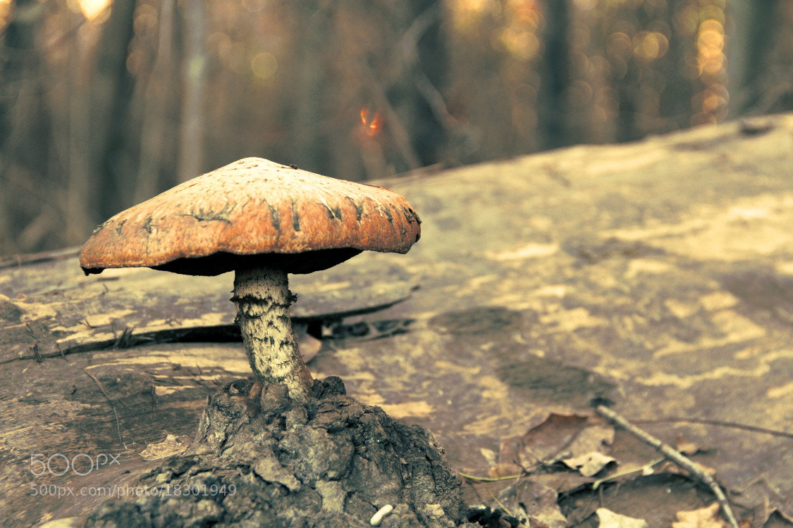Photograph Alone Mushroom by Matthias Zirnig on 500px